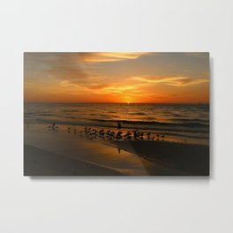 Gulls Gather On The Beach At Sunset Metal Print