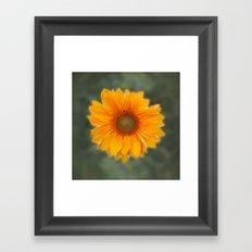 Single Sunflower Framed Art Print