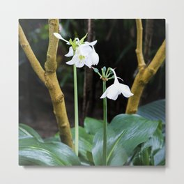 Amazon Lilies Metal Print