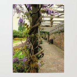 Wisteria Vines Poster