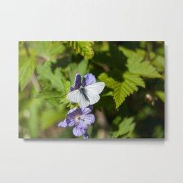 White Moth Photography Print Metal Print