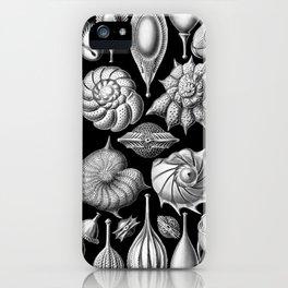 Sea Shells (Thalamophora) by Ernst Haeckel iPhone Case