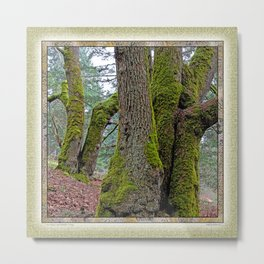 TWO BIG LEAF MAPLE TREES Metal Print