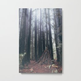 Muir Forest Metal Print