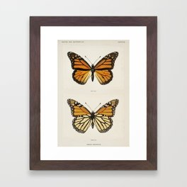 Monarch Butterfly Vintage Framed Art Print