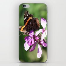 Butterfly and Phlox iPhone & iPod Skin