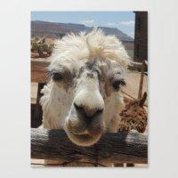 lama Canvas Prints featuring Lama  by Ricarda Balistreri