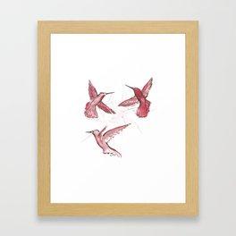 Red Humming-bird watercolor / Colibri rouge à l'aquarelle Framed Art Print