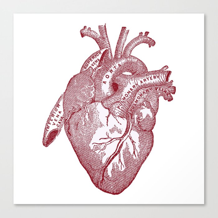 Anatomical Heart Canvas Print By Kristiancalbert Society6