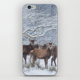 Red deers  from wintry Killarney National Park iPhone Skin
