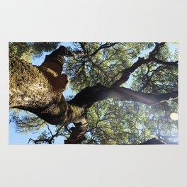 Tree at Jack London's Estate Rug