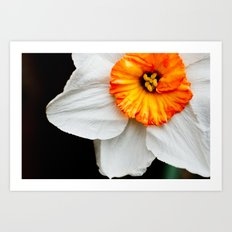 Wall Flower Art Print