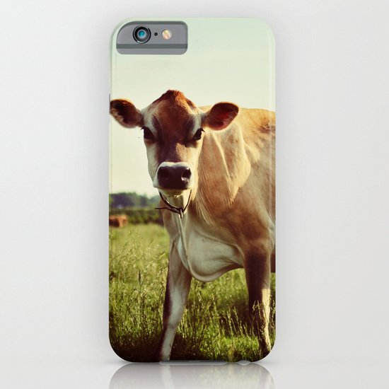 jersey cow iPhone & iPod Case