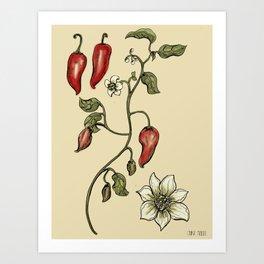 Jalapeno Botanical Art Print