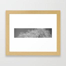 Spring Breeze, Port Hope, Ontario Framed Art Print