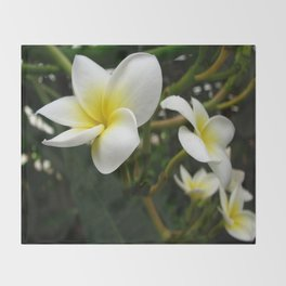 Closeup Frangipani with Natural Garden Background Throw Blanket