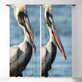 Pelican Blackout Curtain