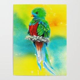 Quetzal - the most beautiful bird Poster