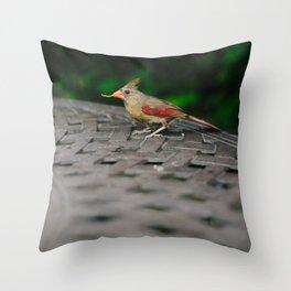 Female Cardinal // Ohio Throw Pillow