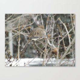 Snowglobe Mourning Dove Canvas Print