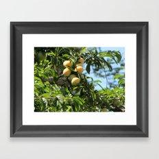 sweet fruits Framed Art Print