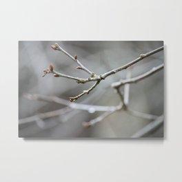 Raindrop branches Metal Print