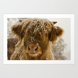 George, the Highland Cow in the snow Art Print