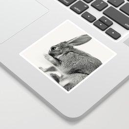 Rabbit Animal Photography Sticker
