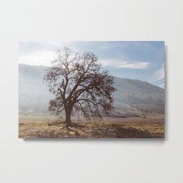 Solo Tree. Metal Print