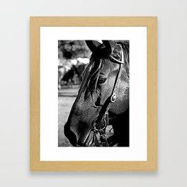 Horse-1-B&W Framed Art Print