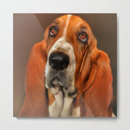 Basset dog portrait Metal Print