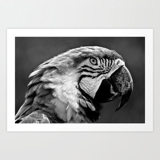 Black & White Parrot  Art Print
