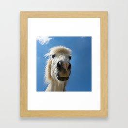 Funny Horse Framed Art Print