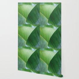 Big Banana Leaves green Wallpaper