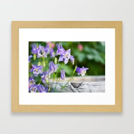 Columbines by Birdbath Framed Art Print