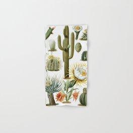 Cactaceae German Botanical Print from Brockhaus Encyclopedia Hand & Bath Towel