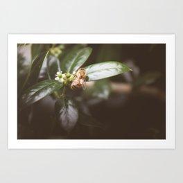 Honey Bee 3 Art Print