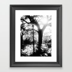 Midnight in the Garden Framed Art Print