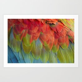 Macaw Feathers. Art Print