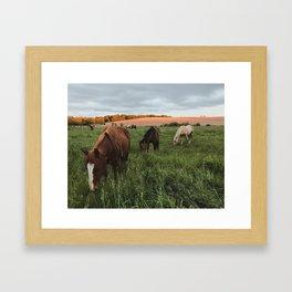 Driftless horses Framed Art Print