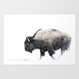 Bison in Yellowstone National Park Art Print