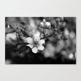 Blackberry Flower Canvas Print
