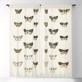 Naturalist Moths Blackout Curtain