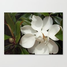 Magnificent Magnolia Canvas Print