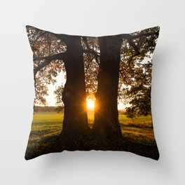 Trees in the evening sun Throw Pillow