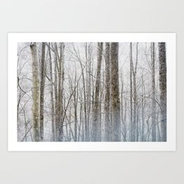 Smoky Forest Art Print