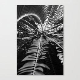 Palm in Black & White Canvas Print