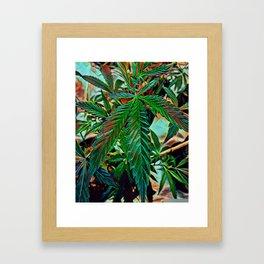 Maui Wowie Framed Art Print
