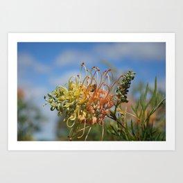 Australian flower and  bee Art Print