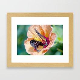 Butterlfy Framed Art Print